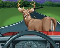 Deer Accidents